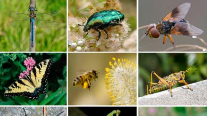 O insectă a fost declarată cea mai importantă viețuitoare de pe Terra! Cine ar fi crezut asta